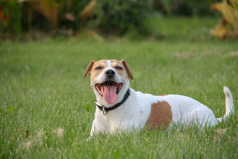 De hond heeft pret op een hoogtepunt van het de zomergebied van groen gras royalty-vrije stock afbeeldingen