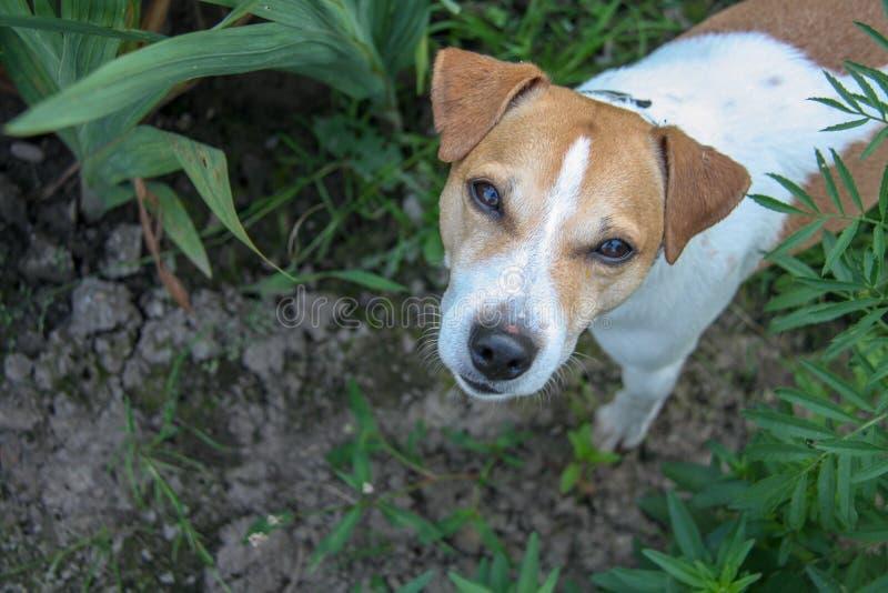 De hond heeft pret op een hoogtepunt van het de zomergebied van groen gras stock foto