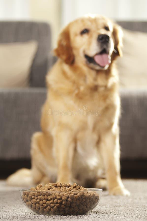 De hond kan niet wachten om zijn voedsel te eten royalty-vrije stock fotografie
