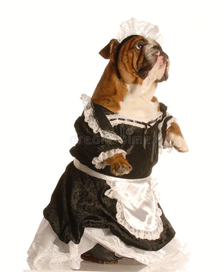 De hond kleedde zich als meisje stock fotografie