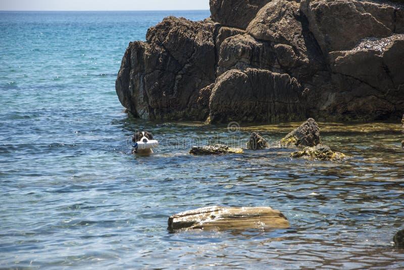 de hond leidde voor redding op terwijl op zee opleiding stock afbeelding