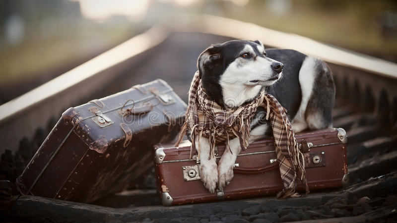 De hond ligt op koffers op sporen royalty-vrije stock foto