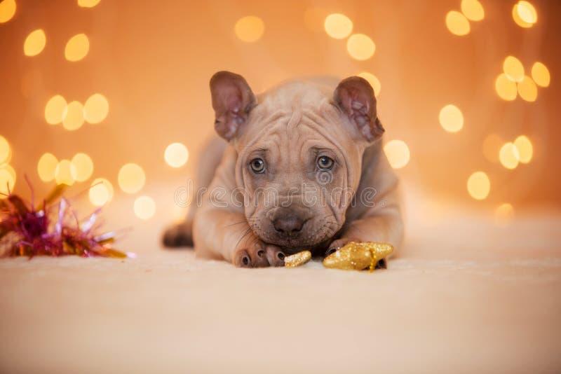 De hond ligt op st van Slingerlichten nieuw jaar stock afbeeldingen