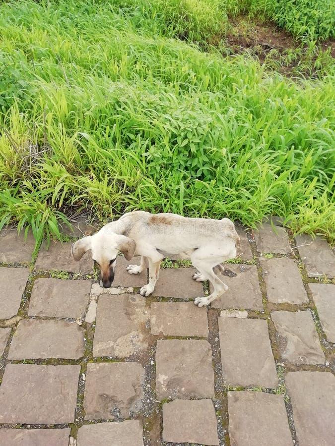 De hond loopt door de tuin stock foto's
