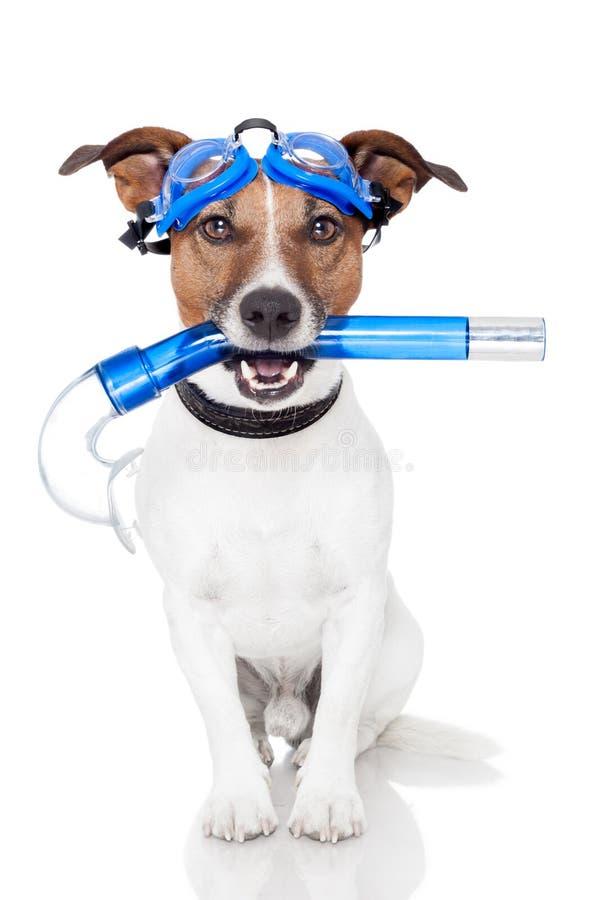 De hond met snorkelt stock fotografie