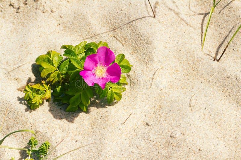 De hond nam op een strand toe royalty-vrije stock fotografie