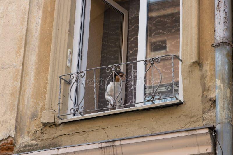De hond op het balkon, bij het oude huis de hond keek uit het balkon stock foto