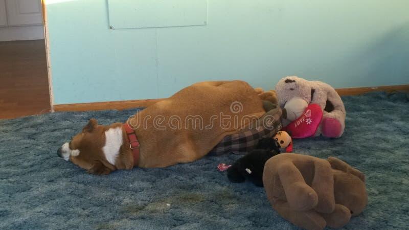 De hond past niet royalty-vrije stock foto's