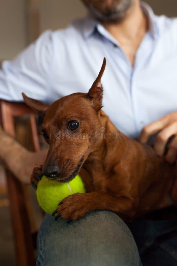 De hond rust met zijn eigenaar royalty-vrije stock afbeelding