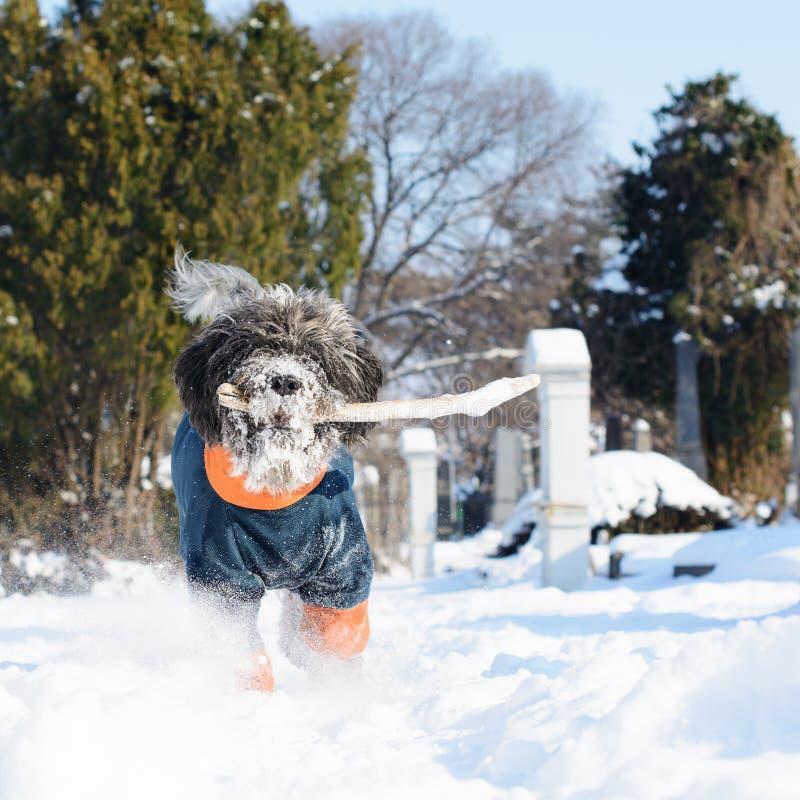 De hond in de sneeuw haalt een stok Selectieve nadruk stock foto