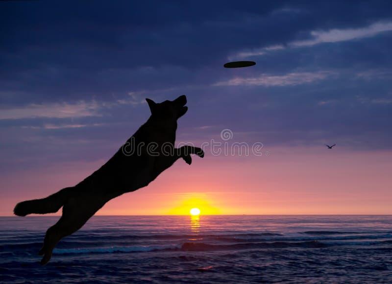 De hond speelt op het strand bij zonsondergang royalty-vrije stock afbeeldingen
