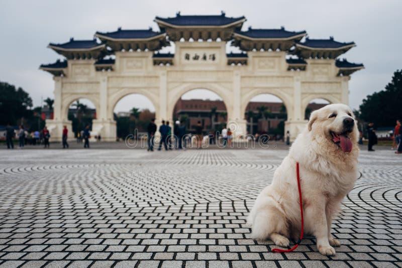 De hond stelt voor Chiang Kai Shek Memorial Hall royalty-vrije stock foto's