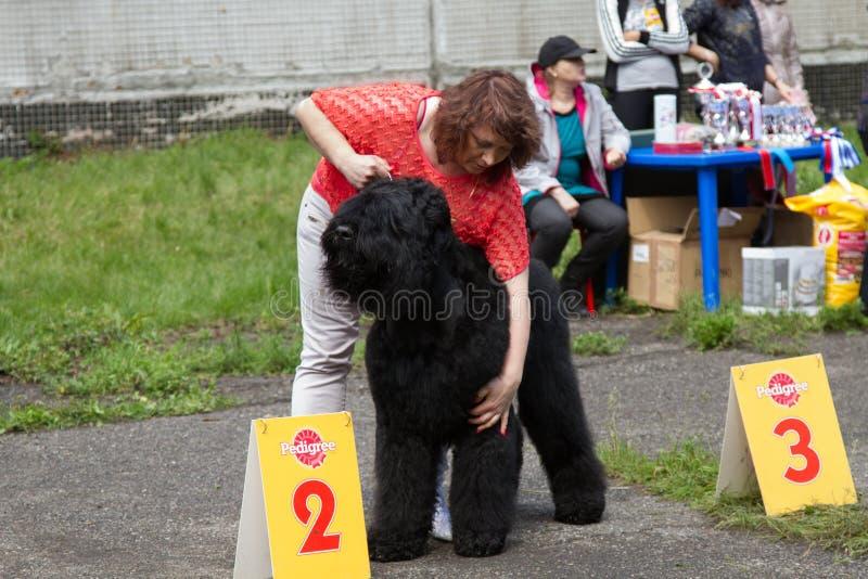 De hond toont stock foto's