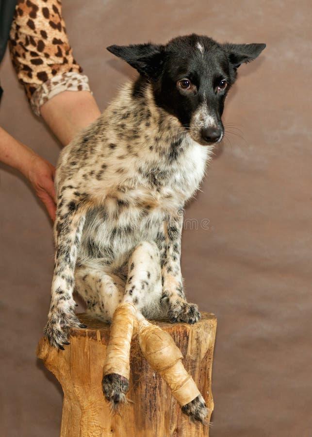 De hond van dakloze dieren beschut royalty-vrije stock foto's