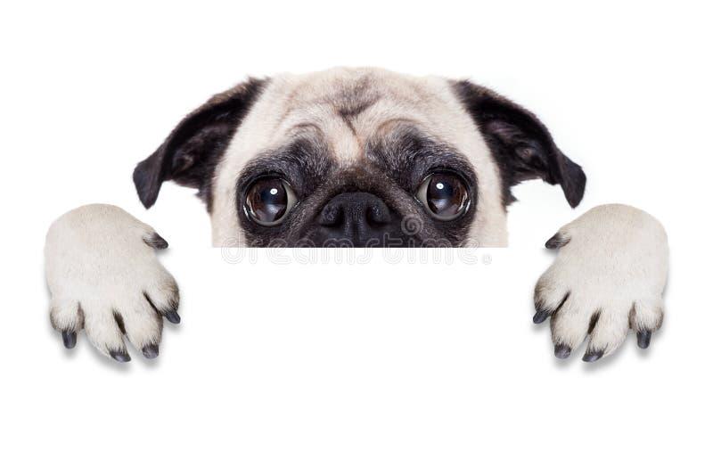 De hond van de aanplakbiljetbanner royalty-vrije stock afbeelding