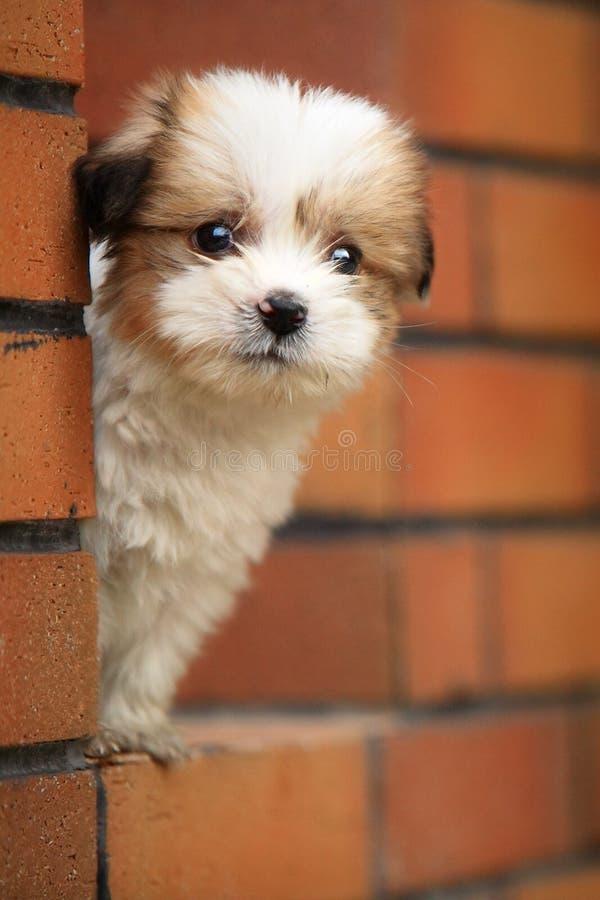 De hond van de baby stock fotografie
