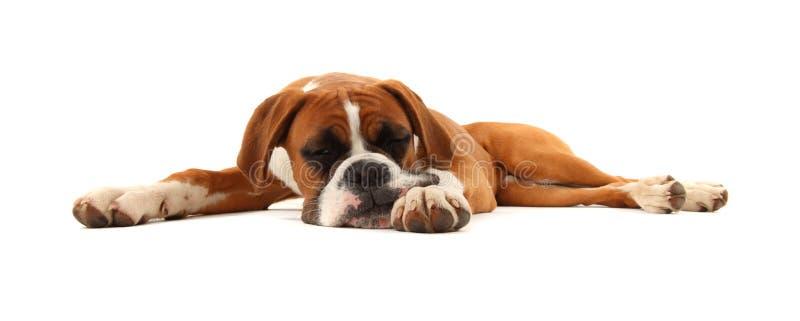 De Hond van de Bokser van de slaap royalty-vrije stock afbeeldingen