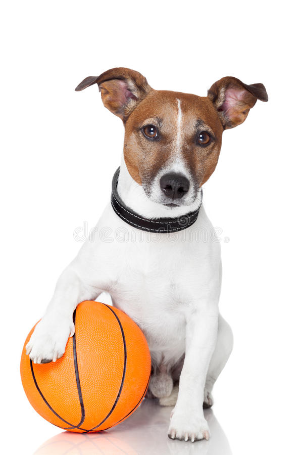 De hond van de de balwinnaar van de mand royalty-vrije stock foto's