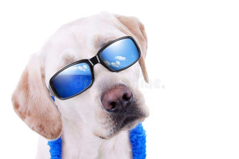 De Hond van de de zomervakantie royalty-vrije stock afbeeldingen