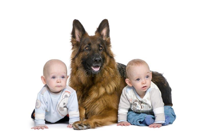 De hond van de Duitse herder met 2 tweelingenjongen royalty-vrije stock foto's