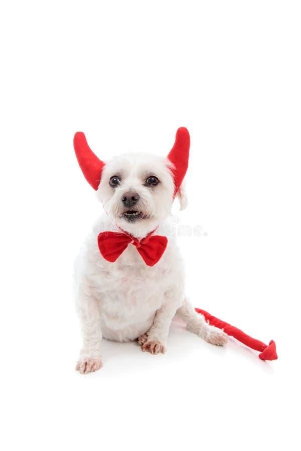De Hond van de duivel royalty-vrije stock fotografie
