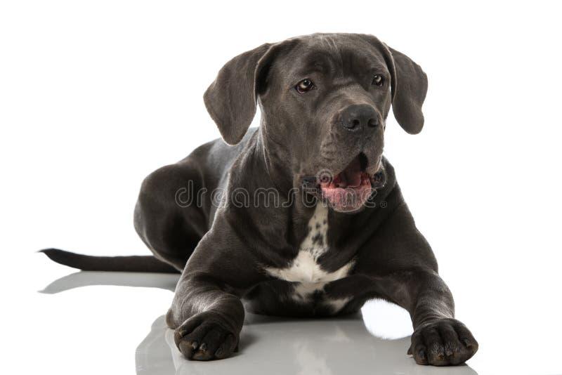Download De Hond van de geeuw stock foto. Afbeelding bestaande uit huisdier - 54089196
