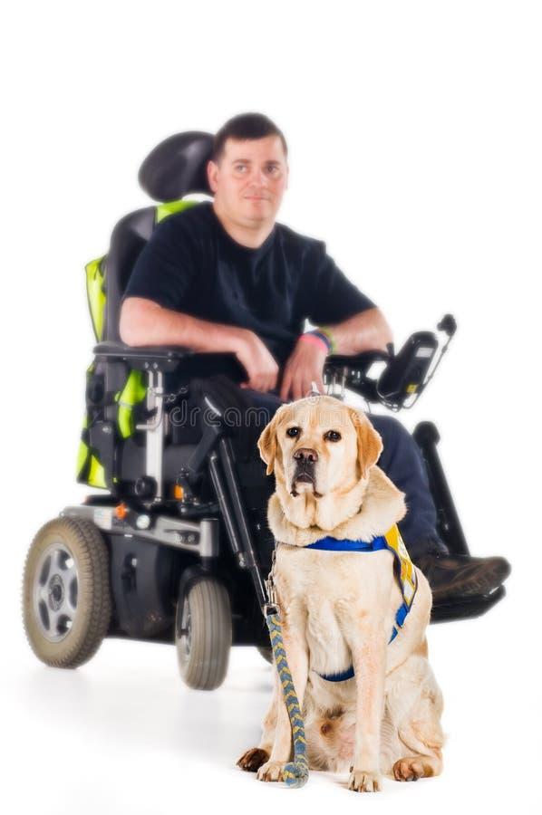 De hond van de gids stock fotografie
