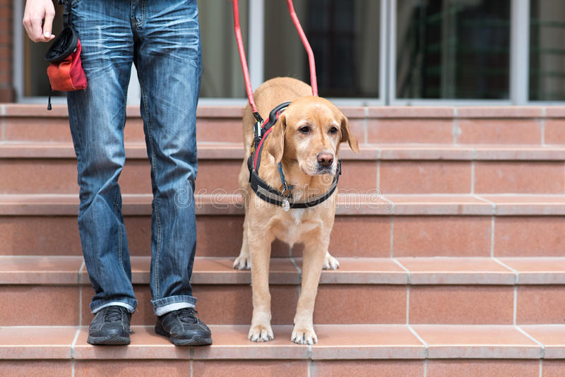 De hond van de gids helpt een blinde stock foto