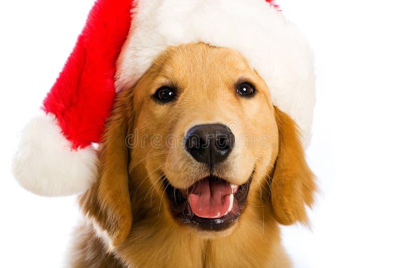 De Hond van de kerstman royalty-vrije stock afbeeldingen