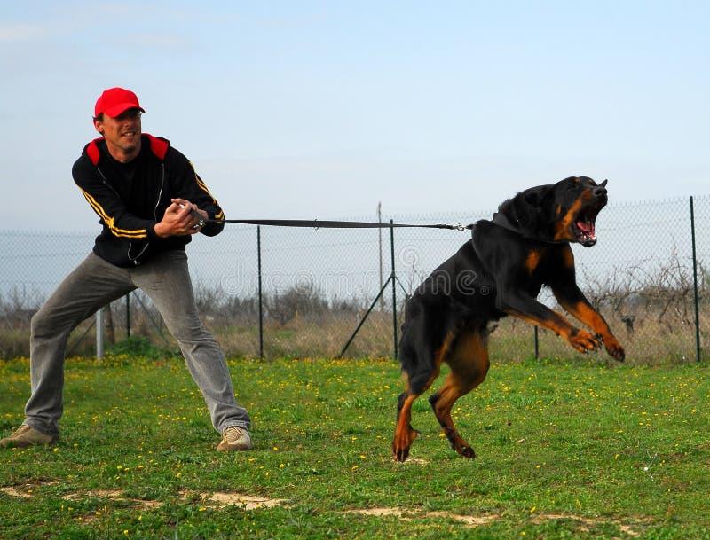 De hond van de opleiding stock afbeelding