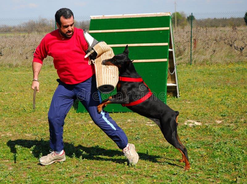 De hond van de opleiding royalty-vrije stock foto