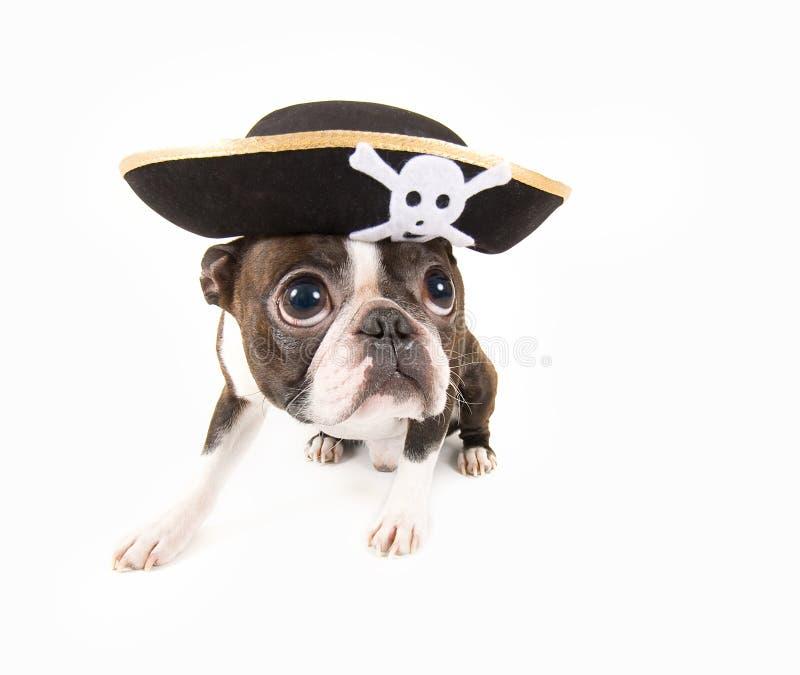 De hond van de piraat royalty-vrije stock foto