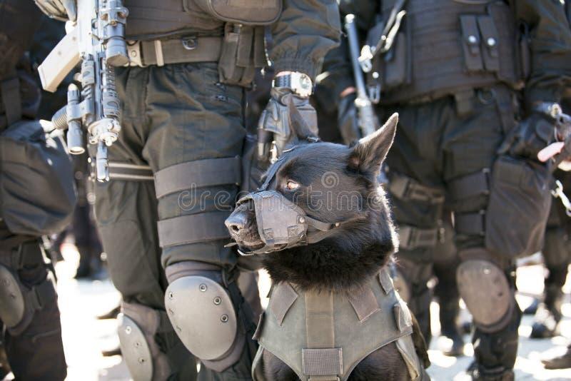 De hond van de politie stock foto's
