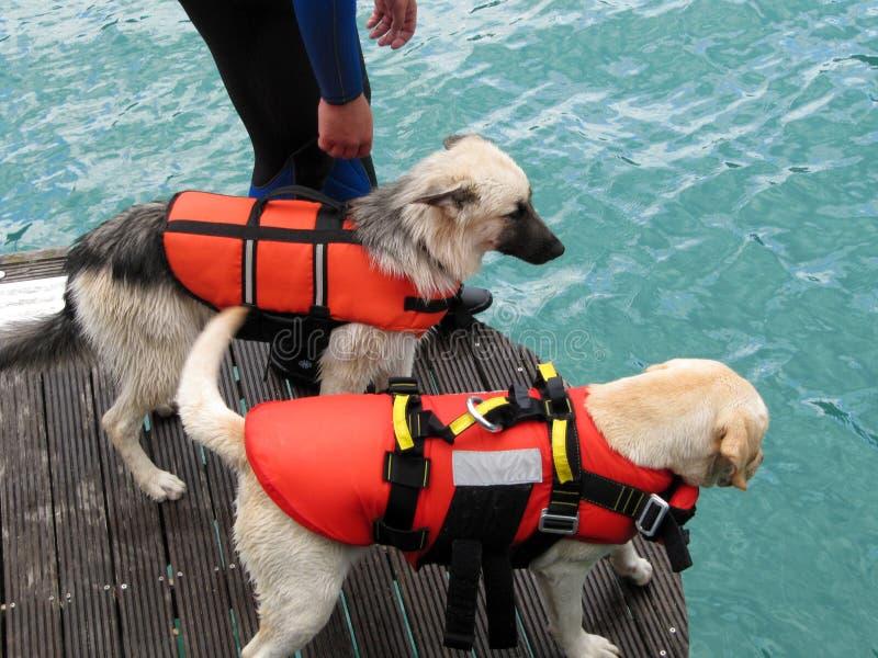 De hond van de redding stock afbeelding