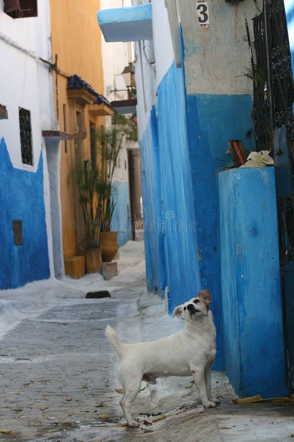 De hond van de steeg royalty-vrije stock foto