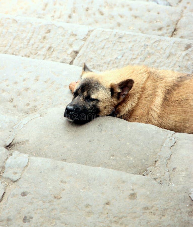 De Hond van de straat stock foto's