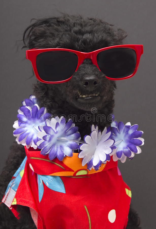 De Hond van de toerist royalty-vrije stock afbeelding