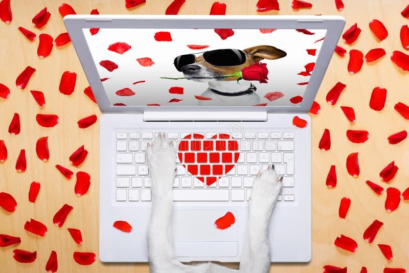 De hond van de valentijnskaartendag, die online op een praatje dateren stock fotografie