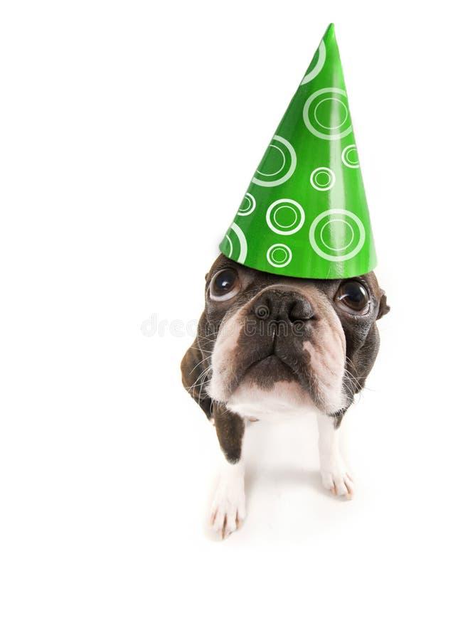 De hond van de verjaardag stock afbeeldingen