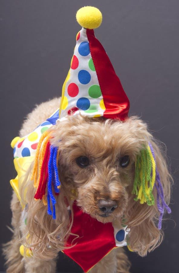 De Hond Van De Verjaardag Stock
