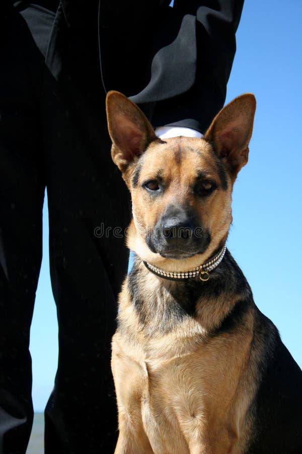 De hond van de wacht royalty-vrije stock afbeeldingen
