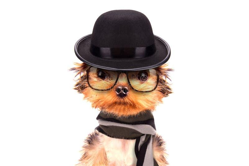 De hond van de winter met hoed en sjaal stock afbeeldingen