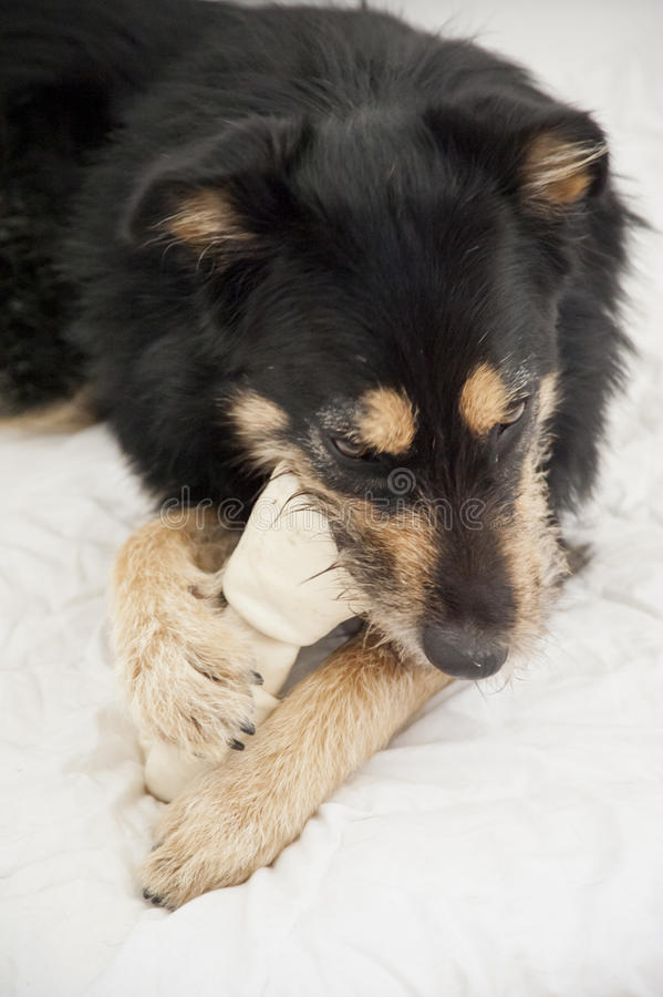 De Hond van de Youndkruising royalty-vrije stock foto