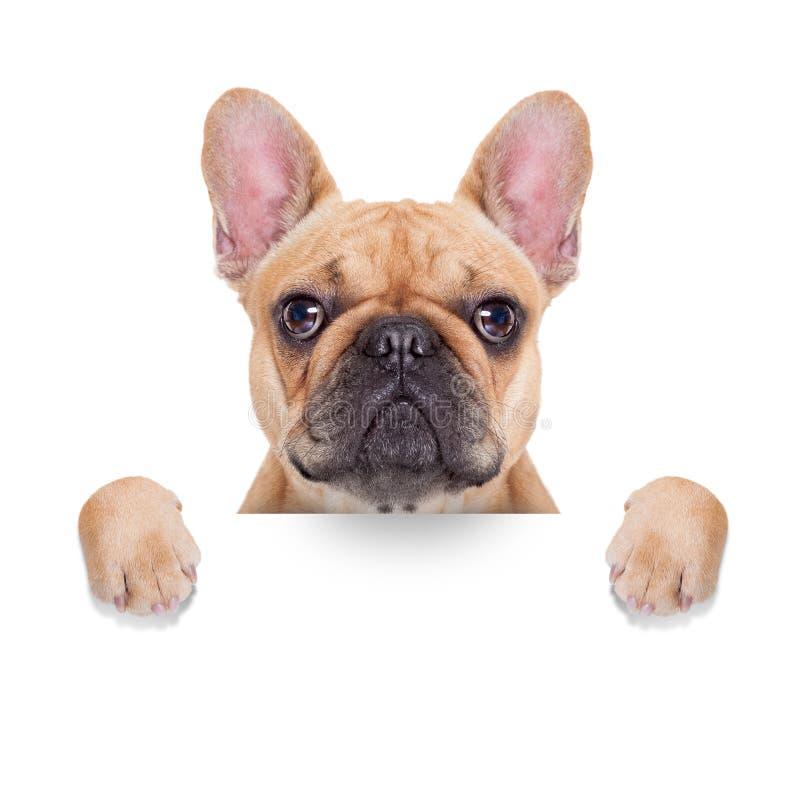 De hond van het banneraanplakbiljet stock foto's