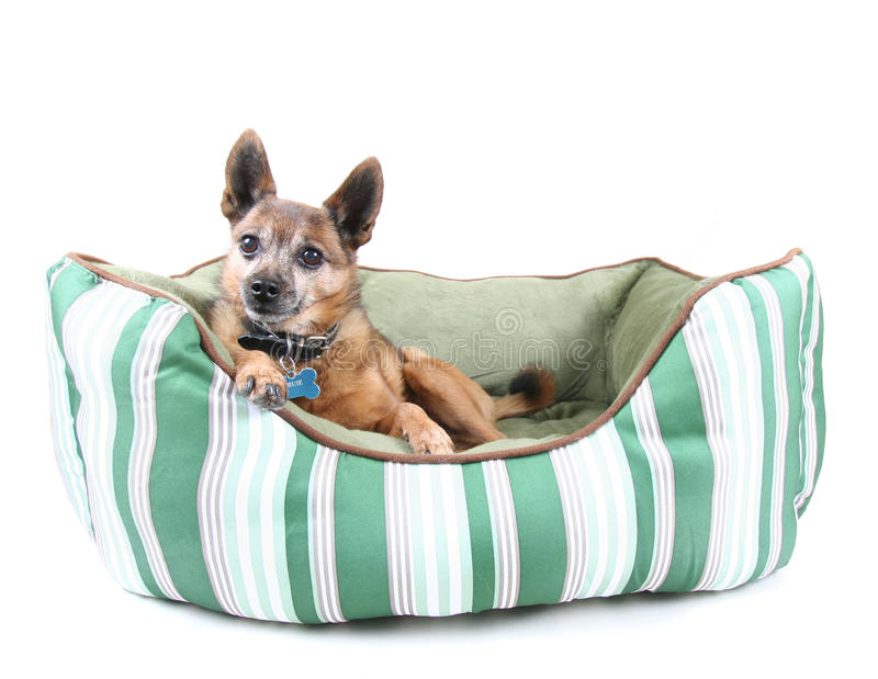 De hond van het bed royalty-vrije stock fotografie