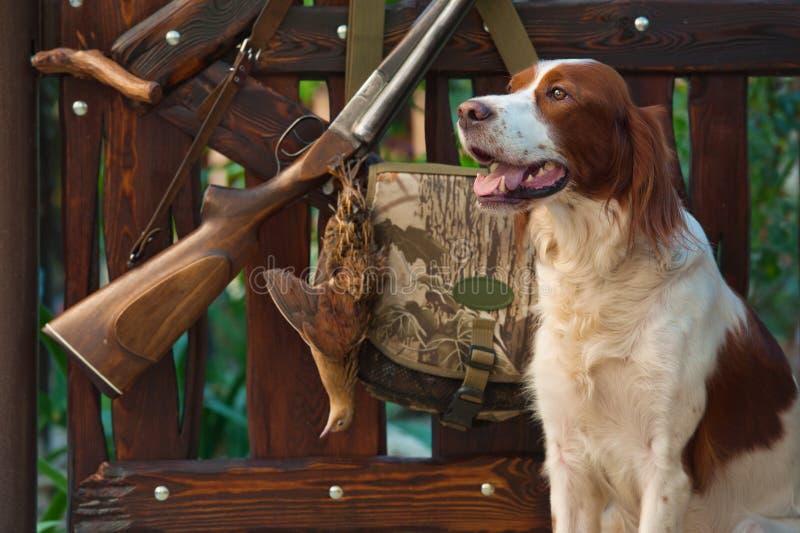De hond van het kanon dichtbij aan jachtgeweer en trofee, in openlucht royalty-vrije stock foto