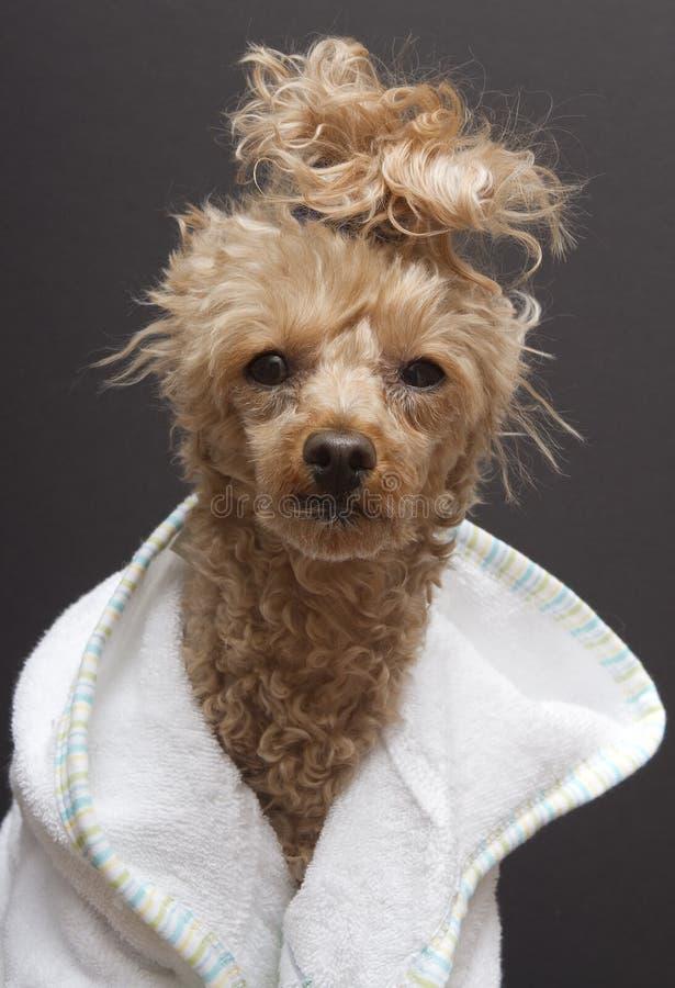 De Hond van het kuuroord stock foto
