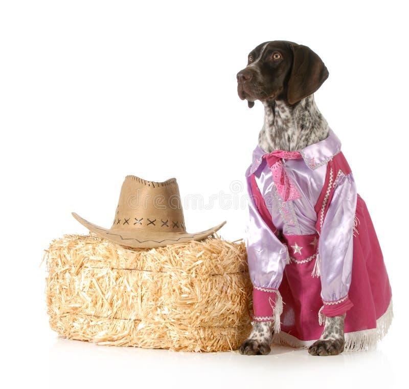 De hond van het land stock afbeeldingen