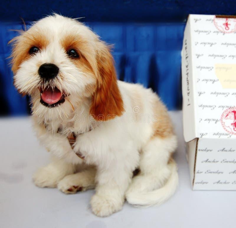 Download De hond van het puppy stock foto. Afbeelding bestaande uit lijst - 11224806