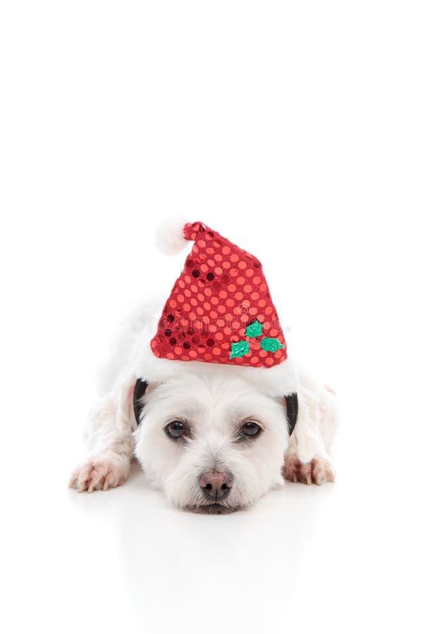 De hond van het puppy met de Rode Hoed van de Kerstman royalty-vrije stock fotografie